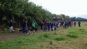 passeggiata cani parco caffarella